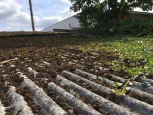 Asbestos garage roof with lichen growth